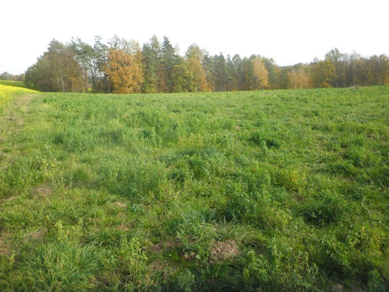 Prodej stavebního pozemku o výměře 806 m2, Markvartovice.